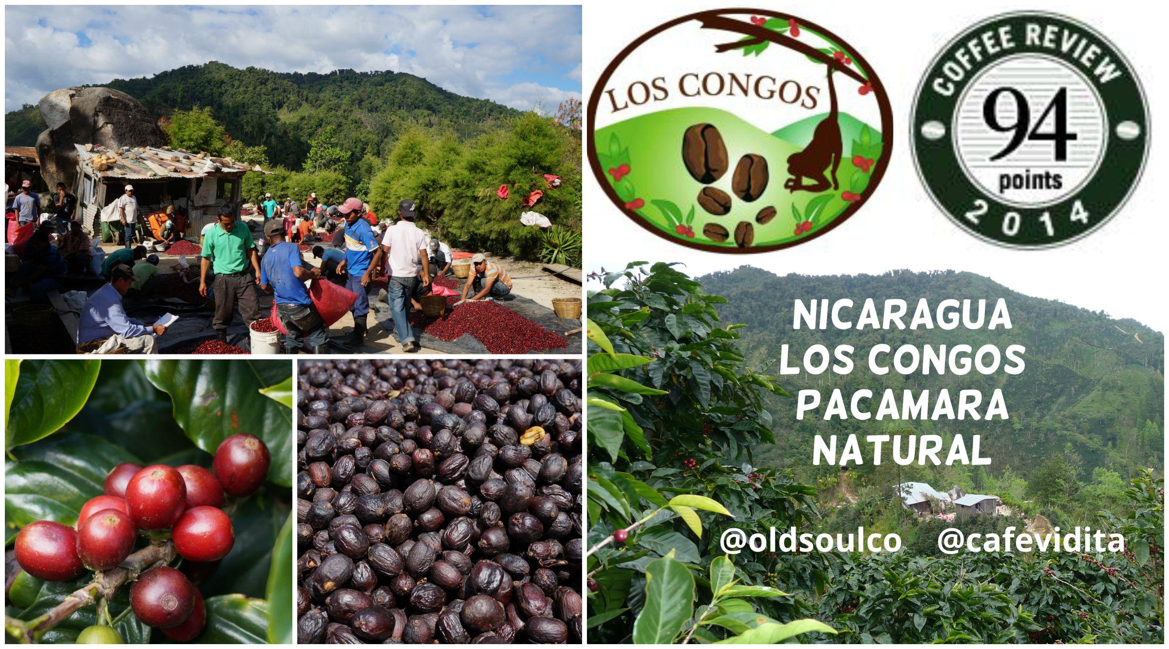 Collage_Los Congos_94pt.jpg