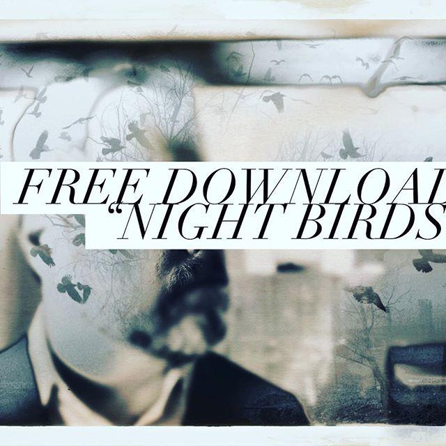 Free Download: Night Birds. Link in bio