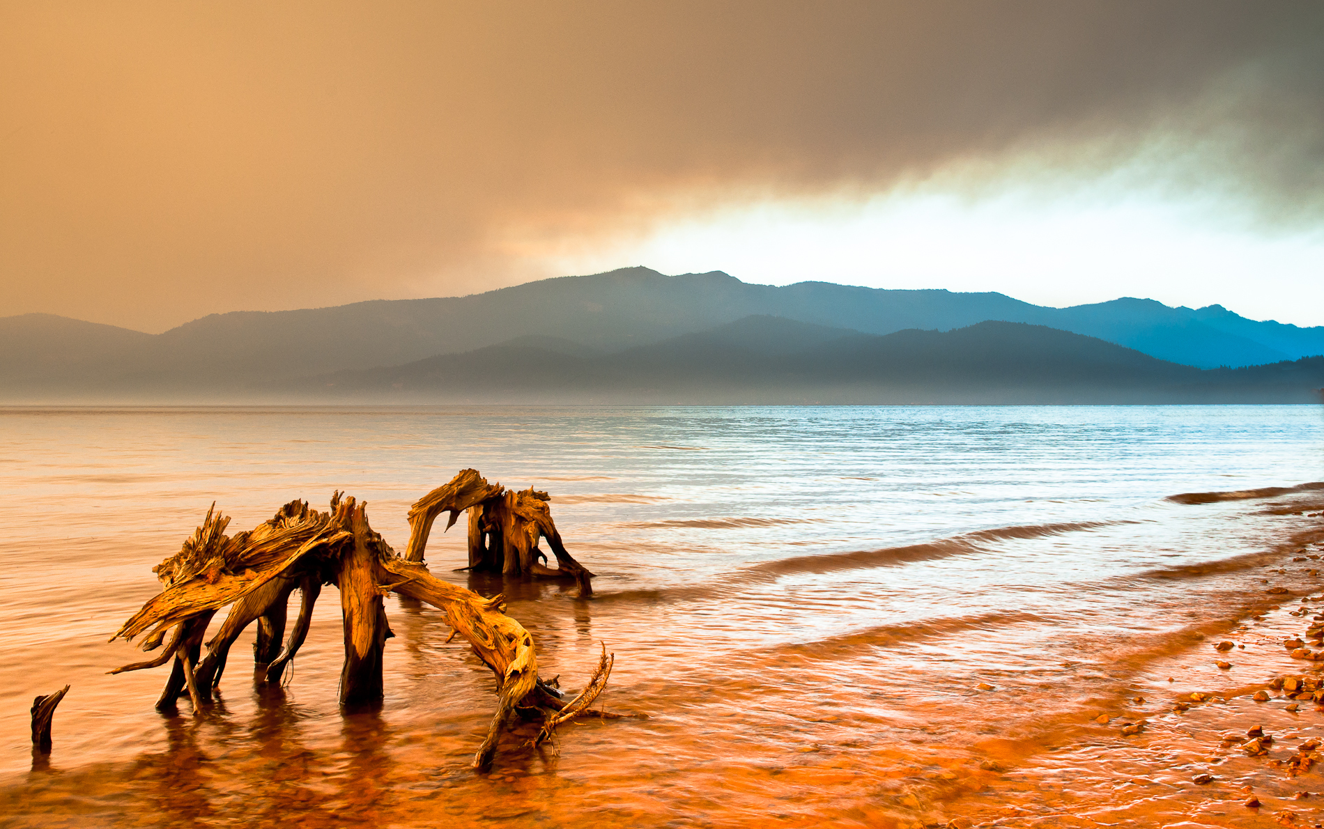 lake almanor  VER 2  trees fire gonejpeg-0482.jpg