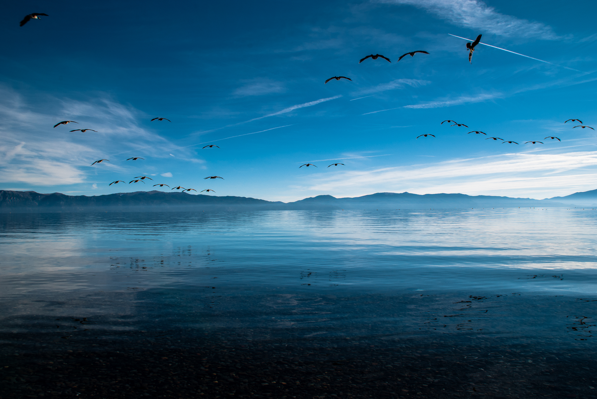 Lake Tahoe Canadian  Geese LP NO WATER FINAL-1613.jpg