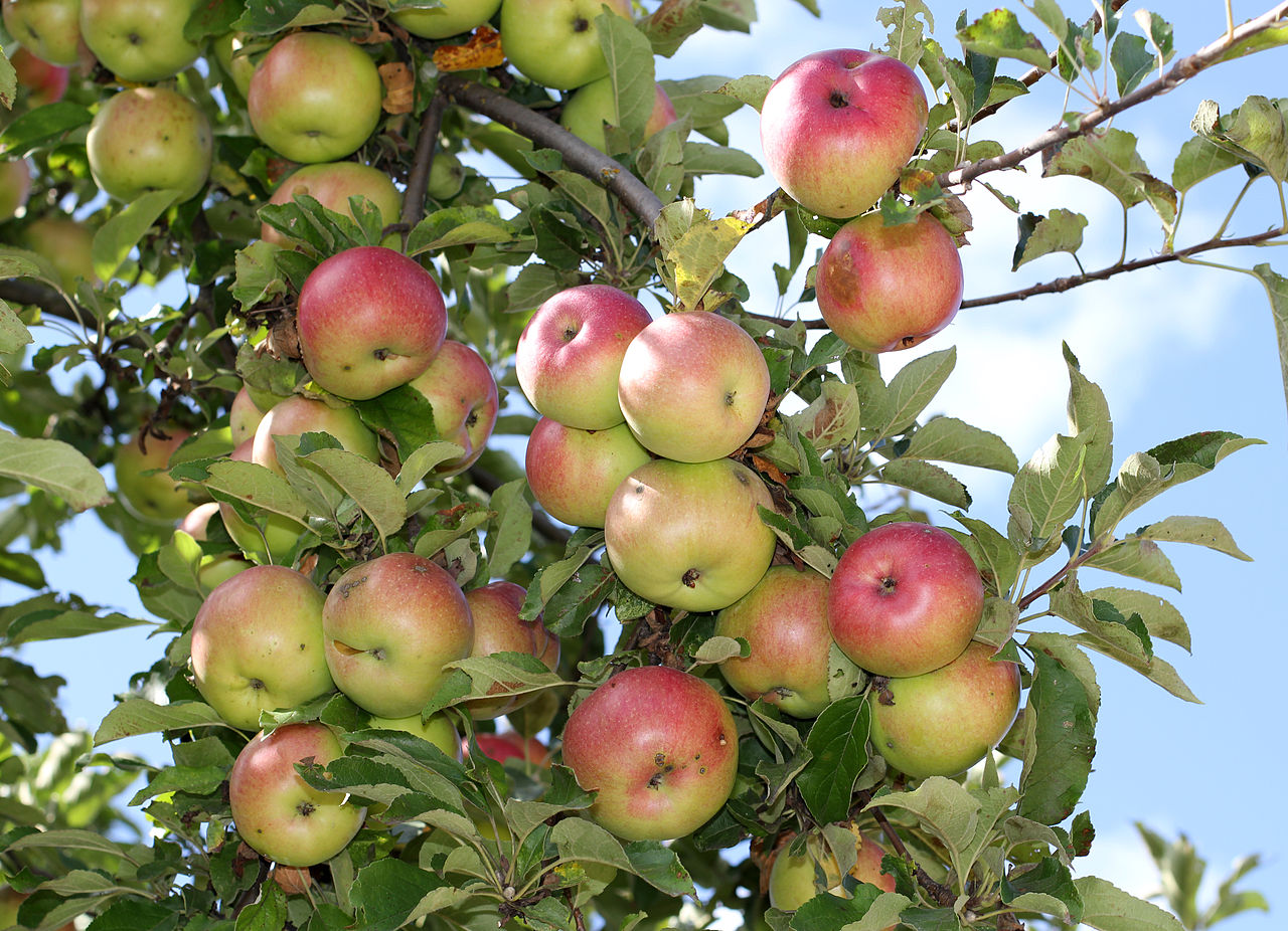 at some point, i changed my apple-picking game plan.