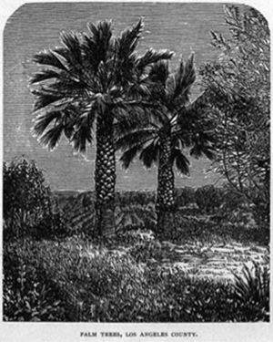 """""""Palm Trees, Los Angeles County"""" from William R. Bentley, """"Hand-book of the Pacific Coast"""", Pacific Press Publishing House, 1884"""