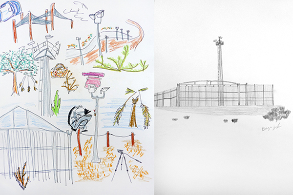 Left: Drawing by Susanna Newbury. Right: Drawing by Berge Zobayan.