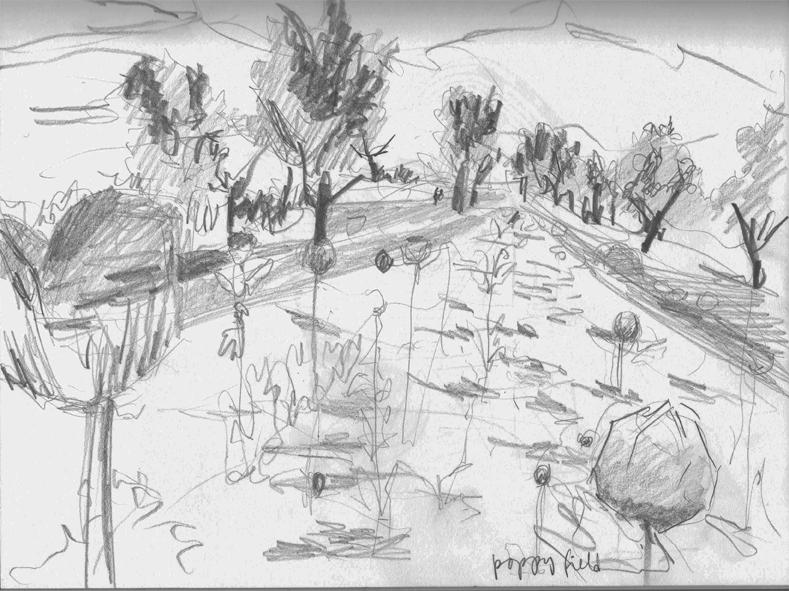 DICE-T Poppy Fields | Drawing by Eva Struble