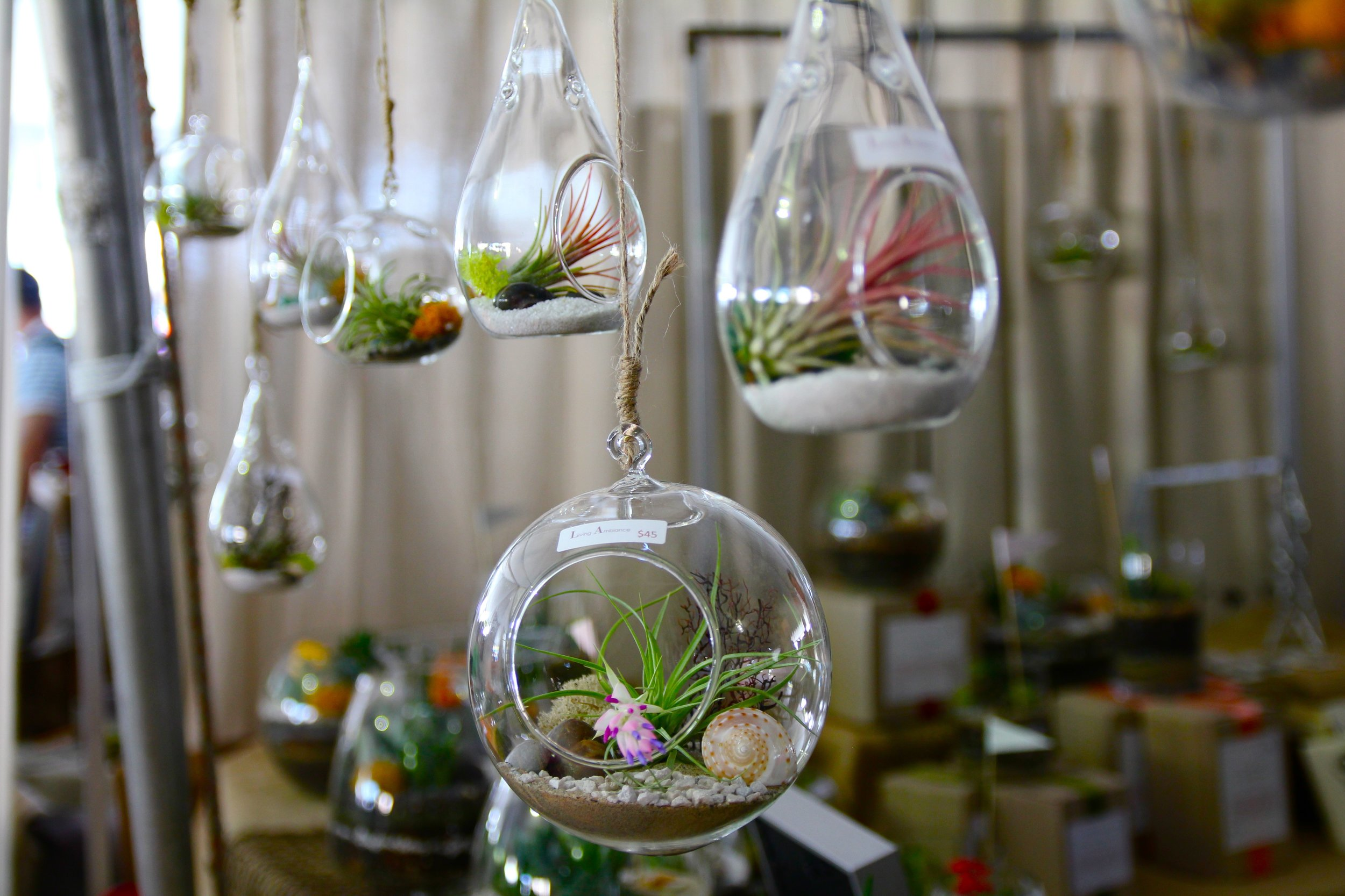 hanging terrariums.jpg