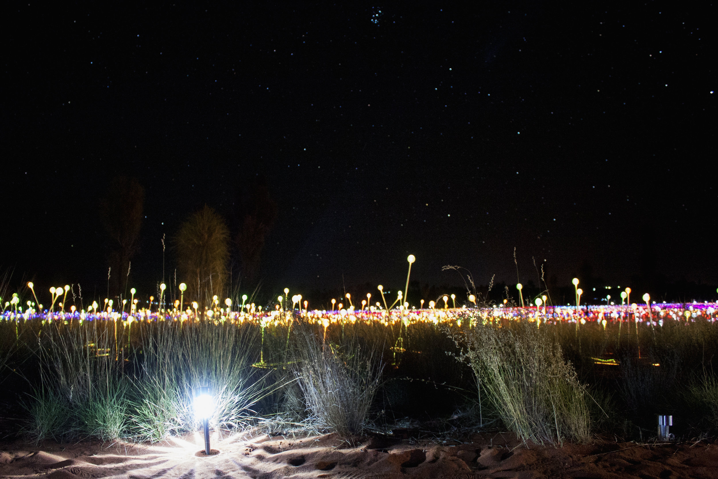 field of light 2.jpg