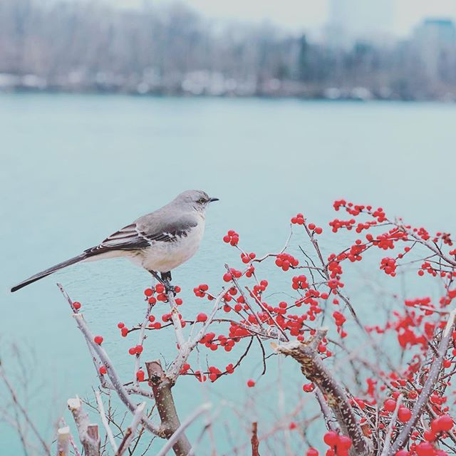 Quiet moment on the Potomac. #winterinDC #georgetownwaterfront #awalkinwinter #lifeindc #hometowntreasures #randombird