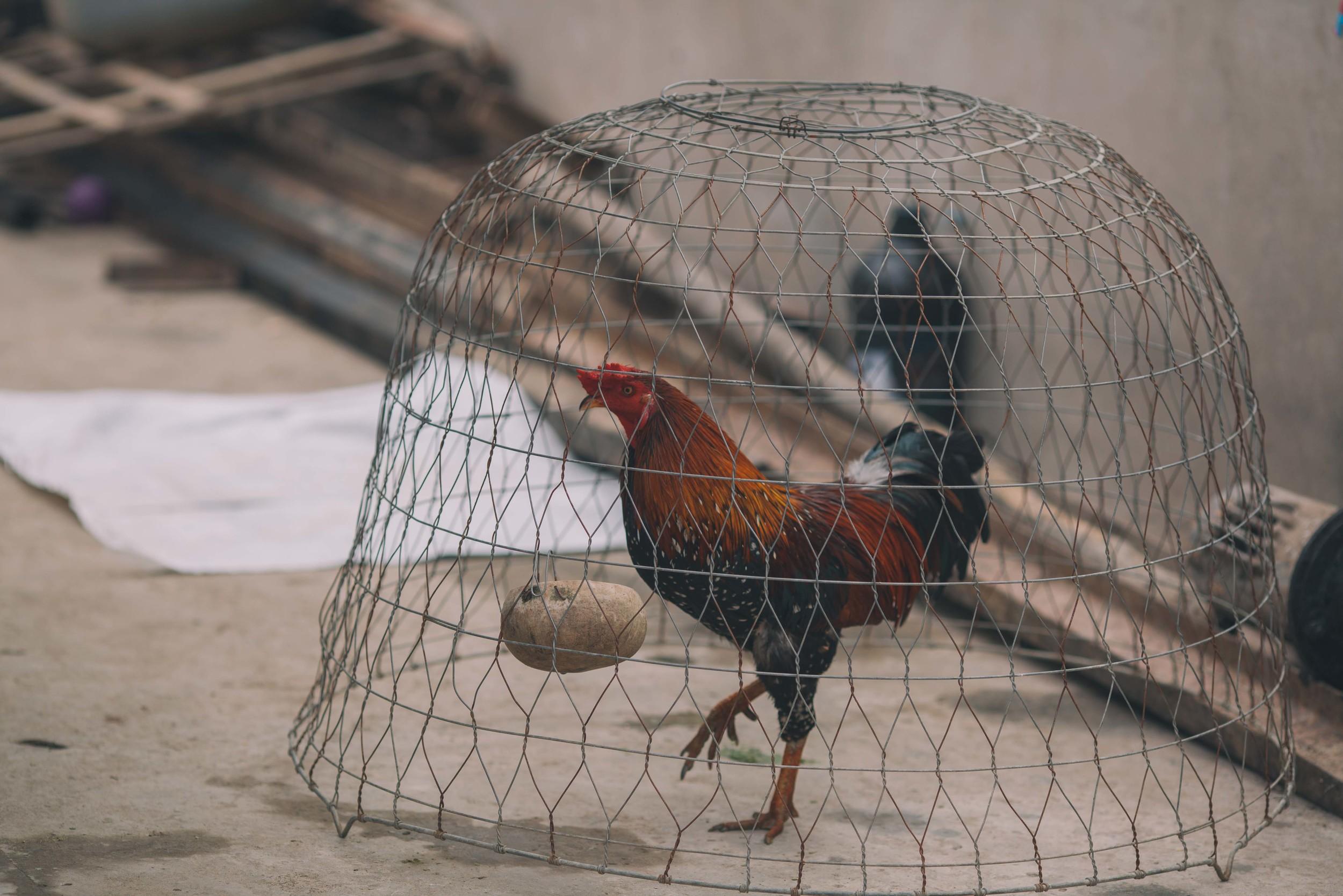 Grover Films   Hoi An Vietnam