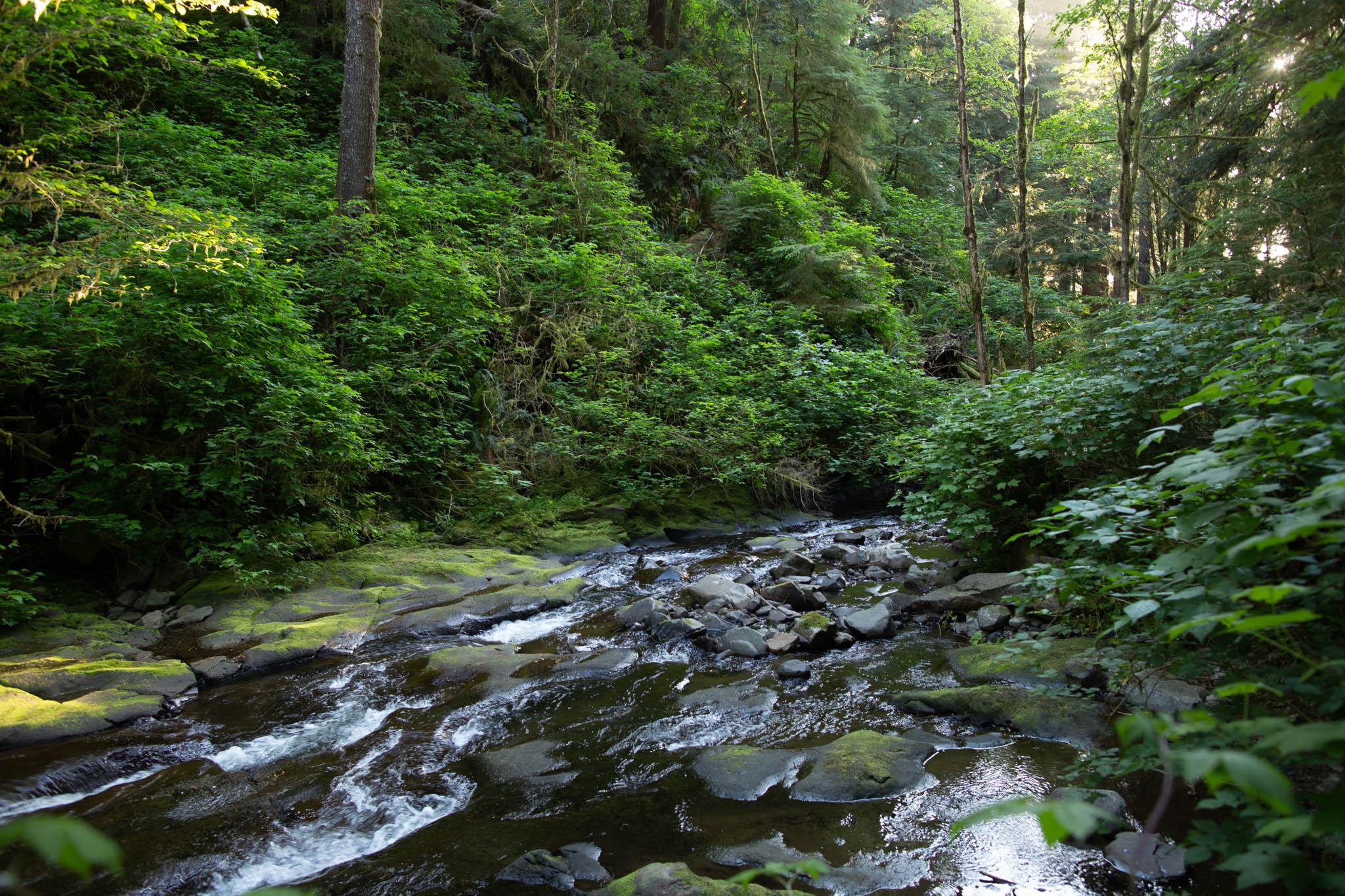 Oregon-Coast-0432-2.jpg