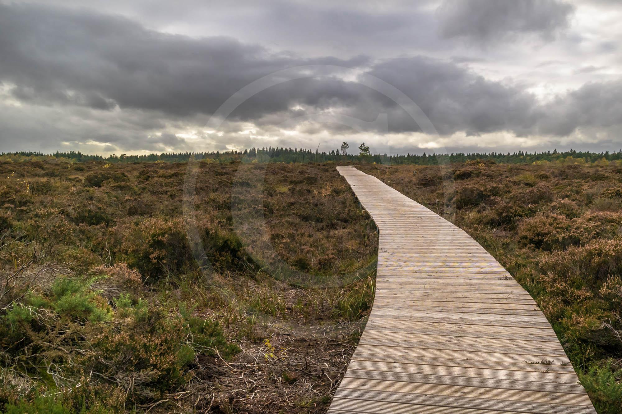 The Boardwalk through Abbeyleix Bog