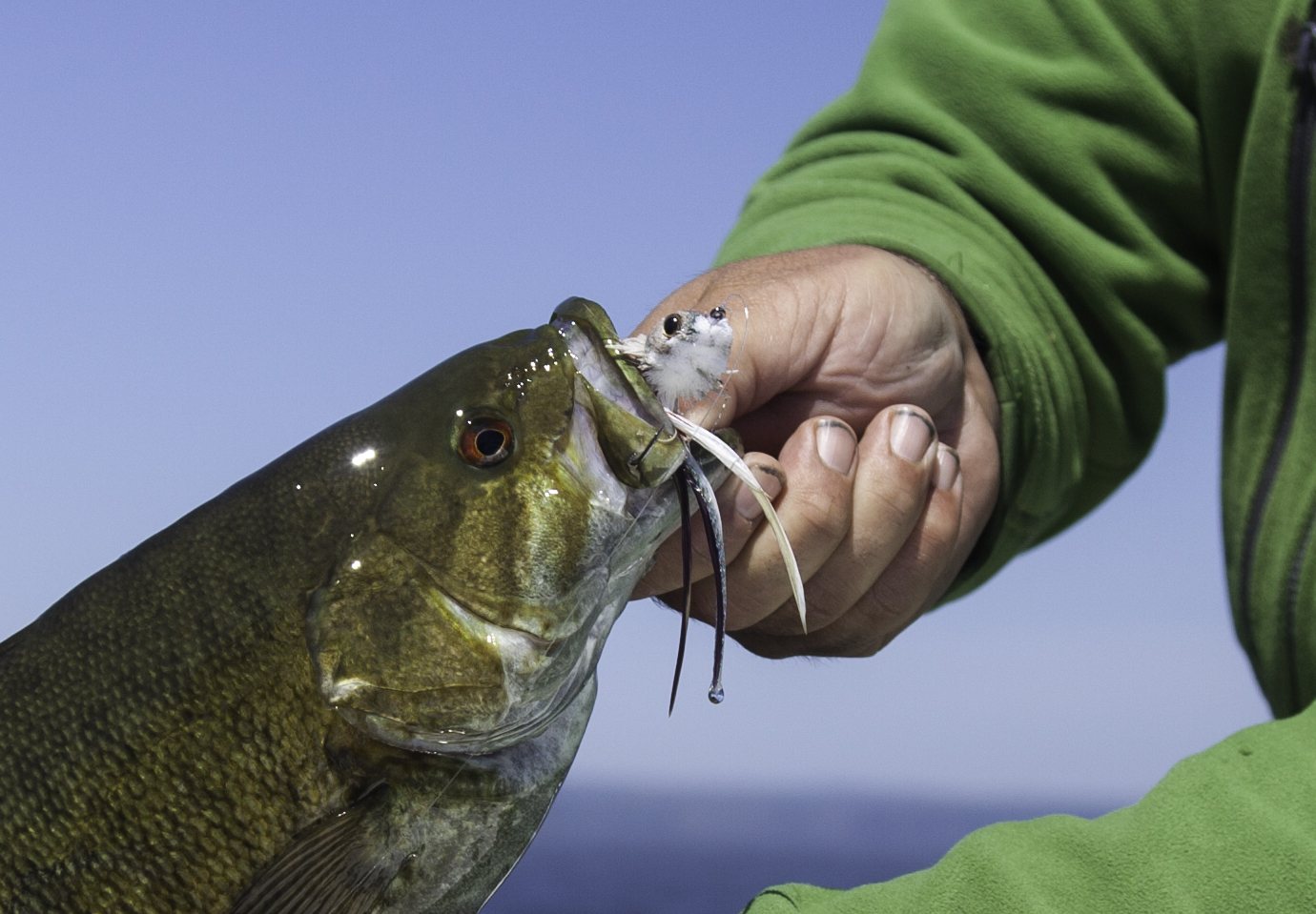 A Dave Whitlock Swimming Baitfish got this guy