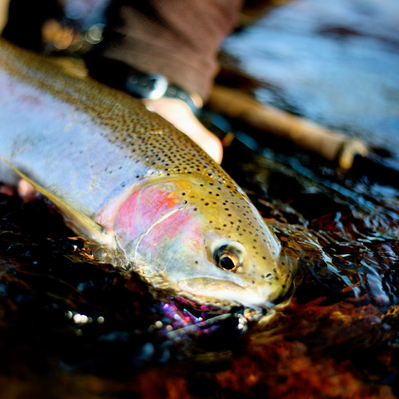 Spring Steelhead is right around the corner and it's shaping up to be an early run based on current snowpack and weather conditions.