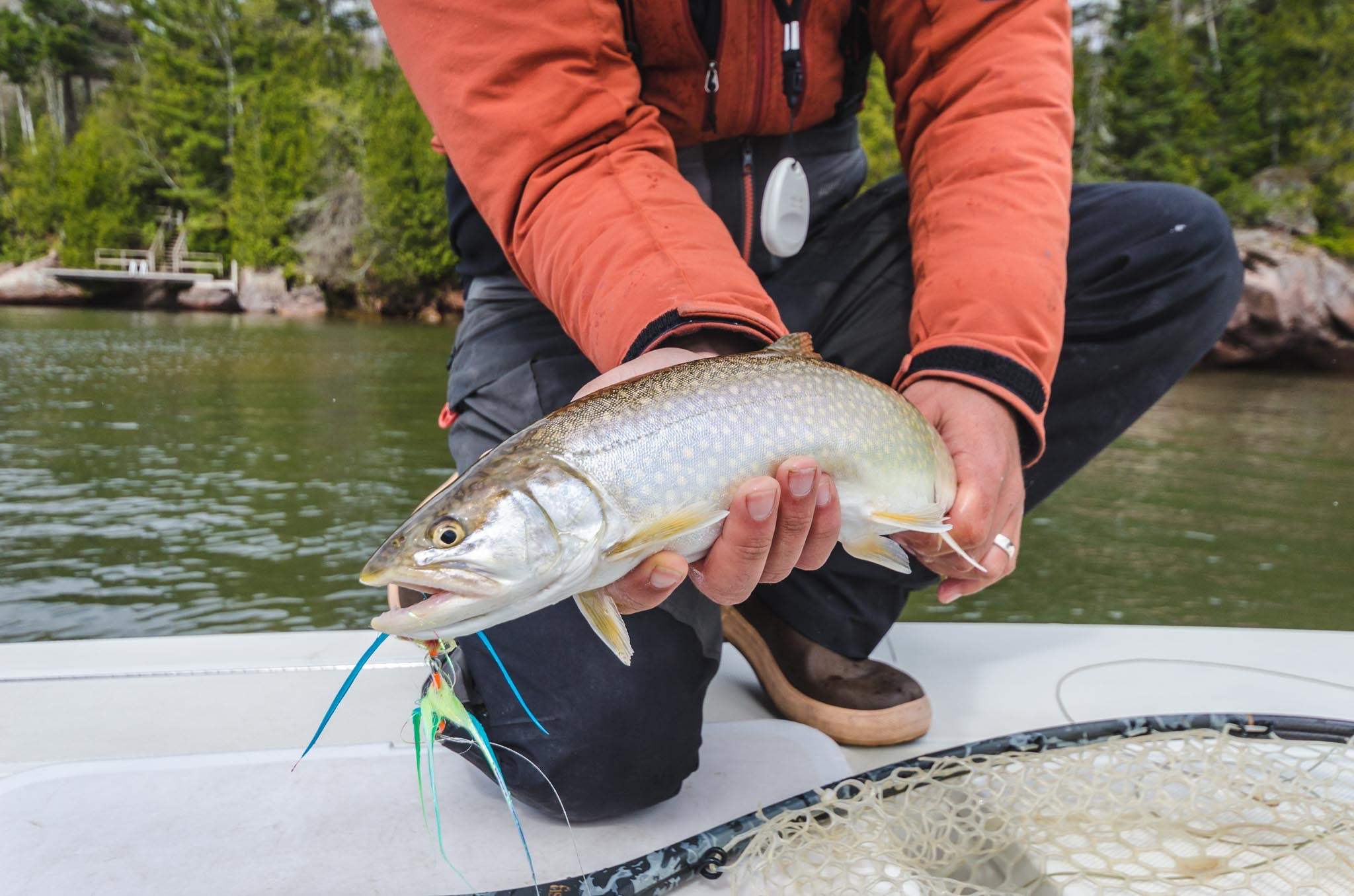 All the Splake we have right now make for great targets on a fly rod or light tackle.  This one smashed a big bright streamer on our second cast of the day.