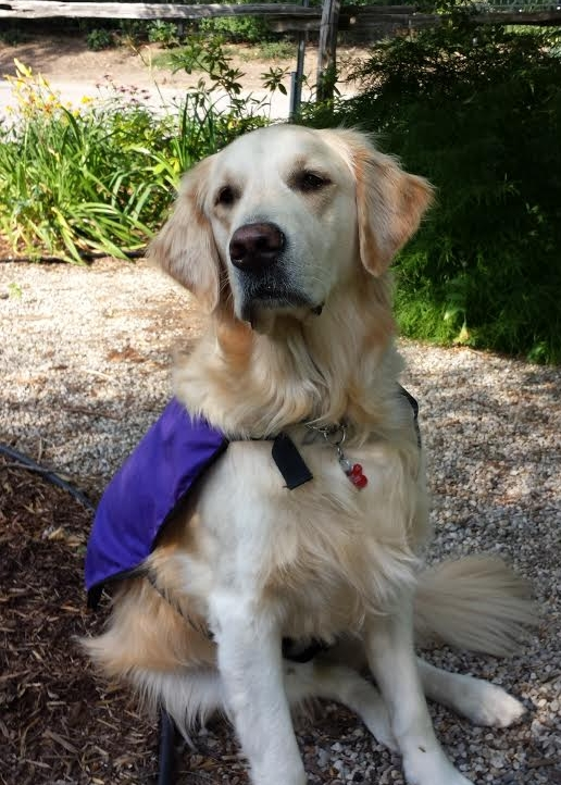 Uno, SEED's Canine Assisted Intervention dog