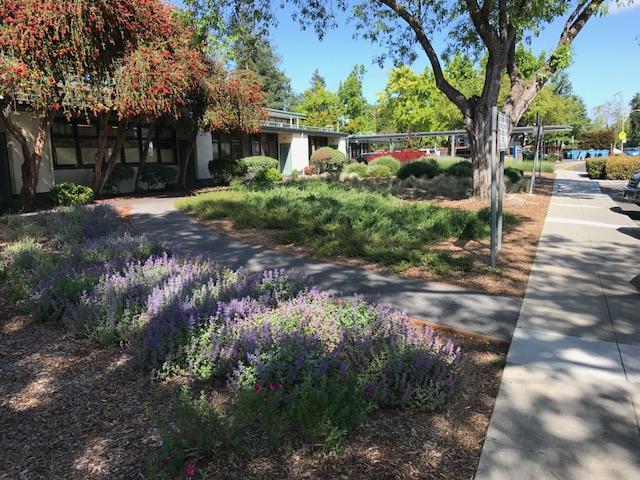 Drought Resistant Rebate Planting