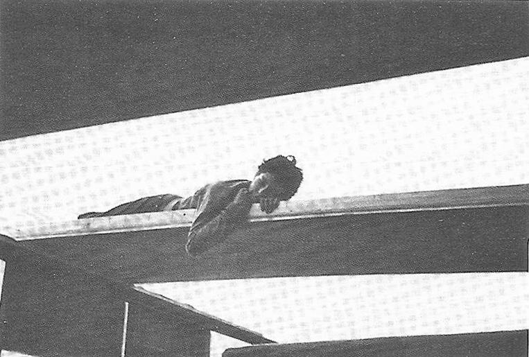 7_134_Nancy, montage de la maison de famille du Haut-du-Lièvre, été 1954. Catherine en train d'apatir un panneau du toit. Centre Pompidou, Bibliothèque Kandinsky. Fon.jpg