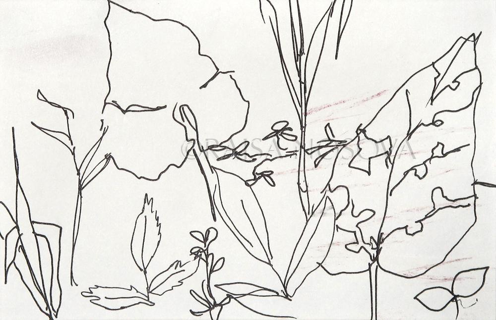 DAY 51, JUNGLE PLANTS NEAR KAREN TRIBAL VILLAGE