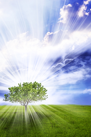 Individual Tree.jpg