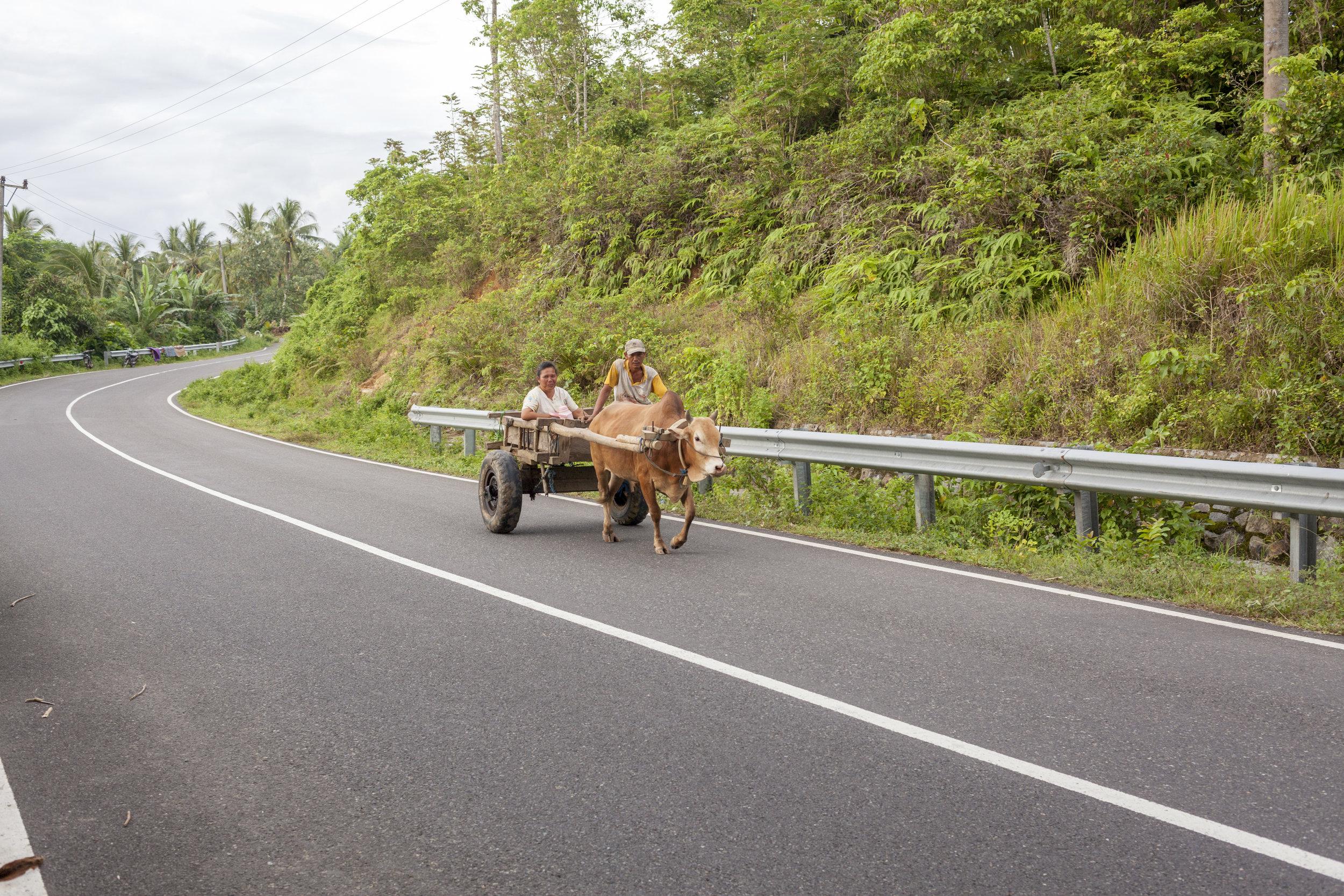 Sumatra ox cart