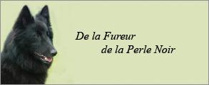 fureur-perle-noir.jpg