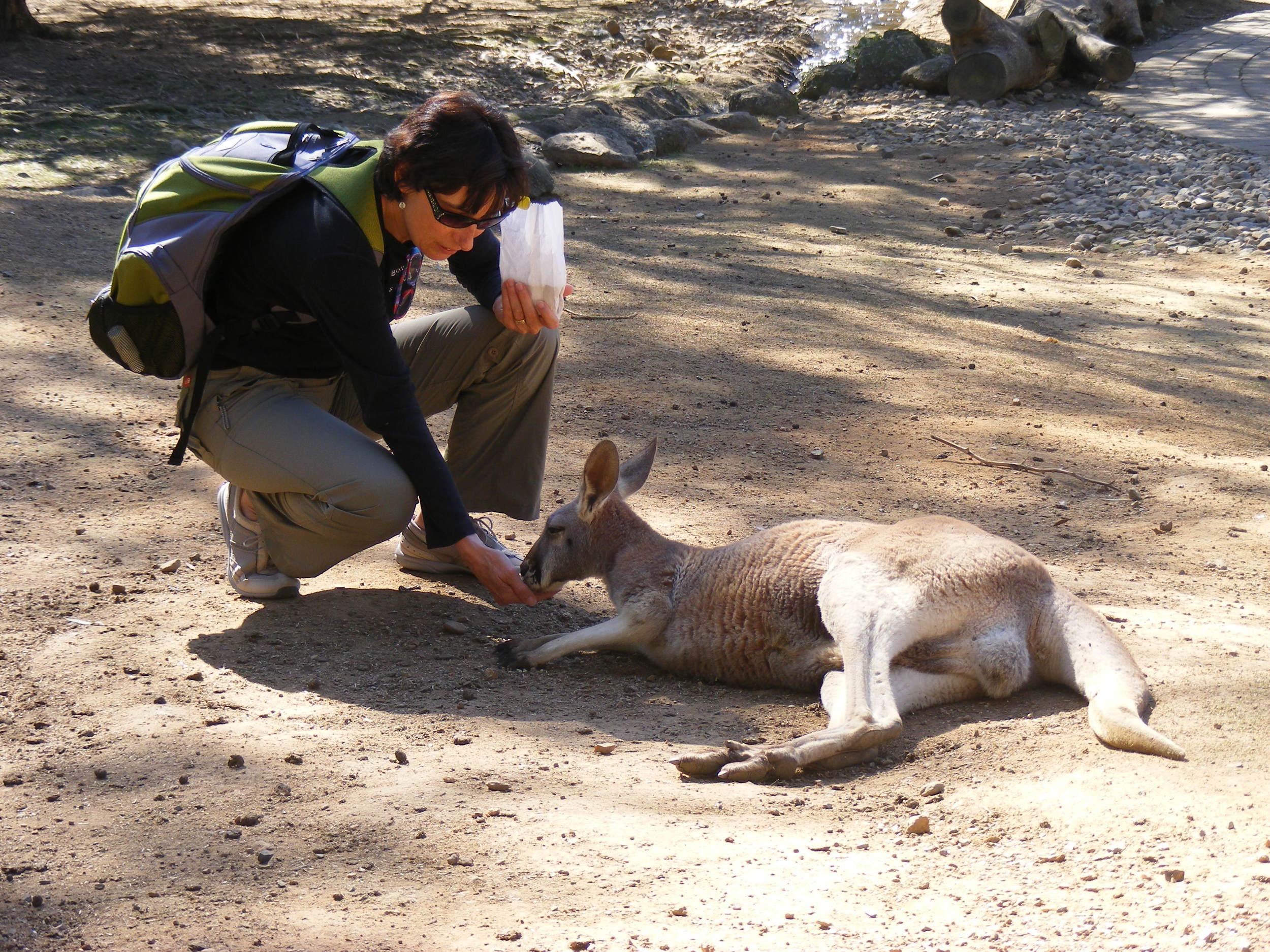 Kris feeding the Roos