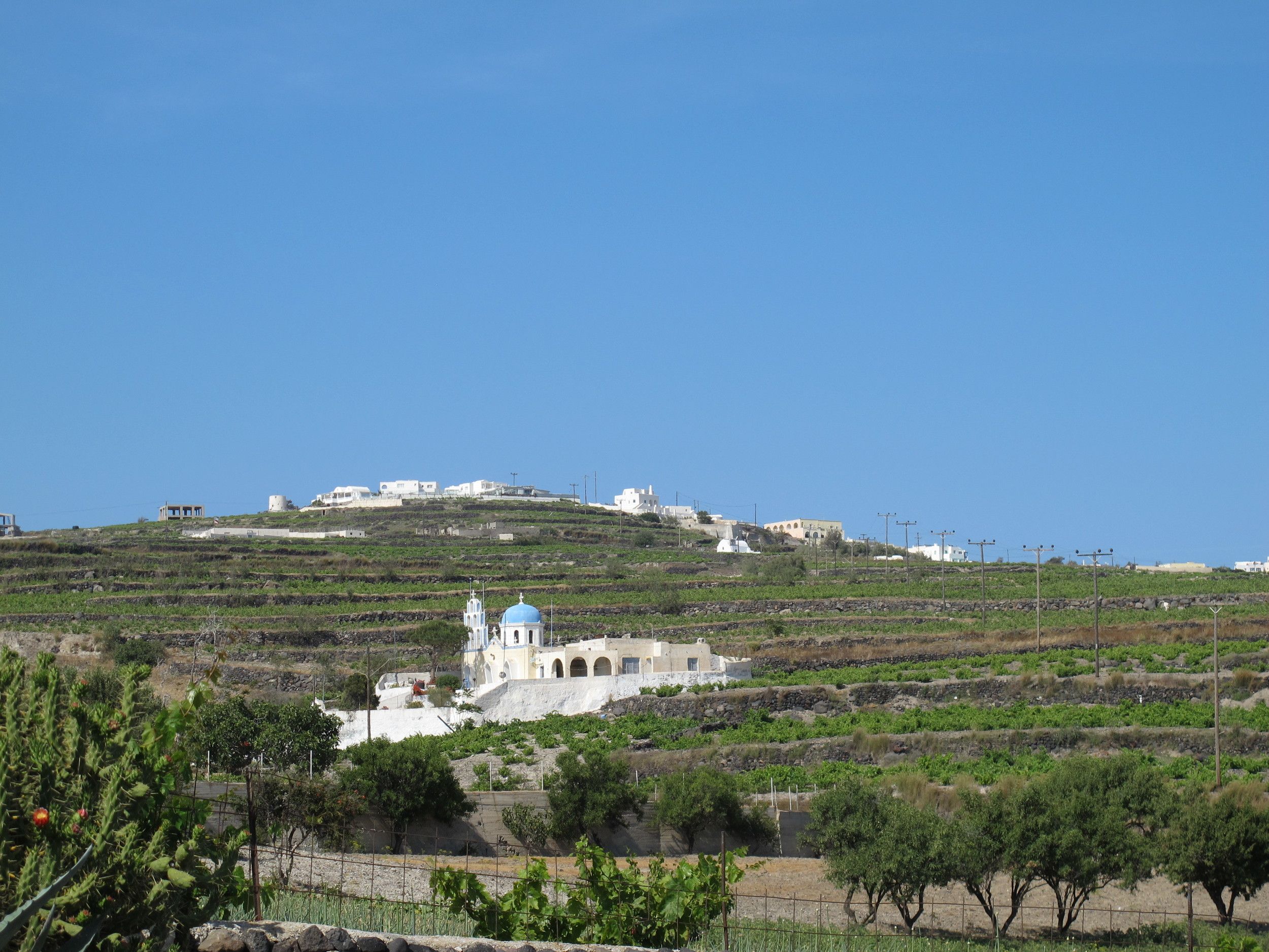 A typical view of Santorini, with vineyards.