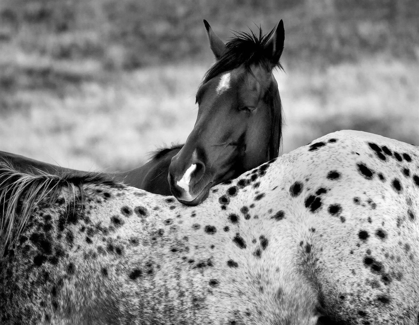 community horses.jpg