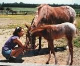tia and foal 2.jpg
