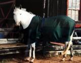 summer glenn horse.jpg