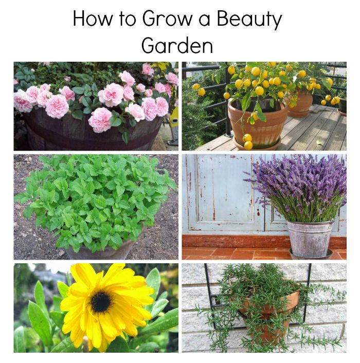 Grow a Beauty Garden.jpg