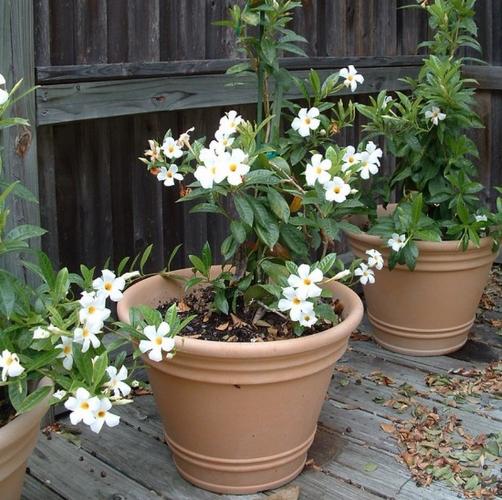Grow a Beauty Garden.jpg