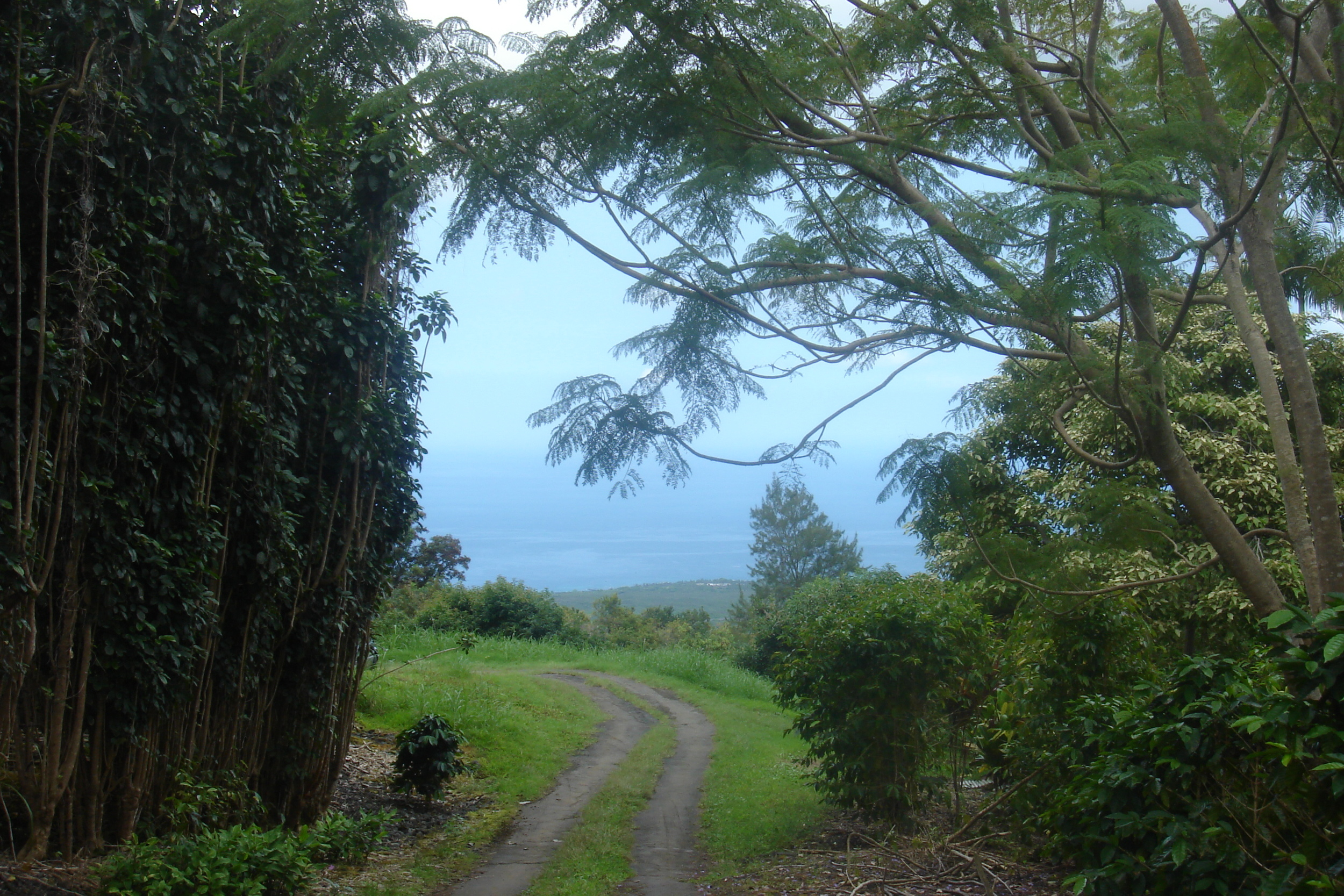 The climb up to our farm in Honaunau, Hawaii.  The beautiful Pacific Ocean glimpsed through the trees.