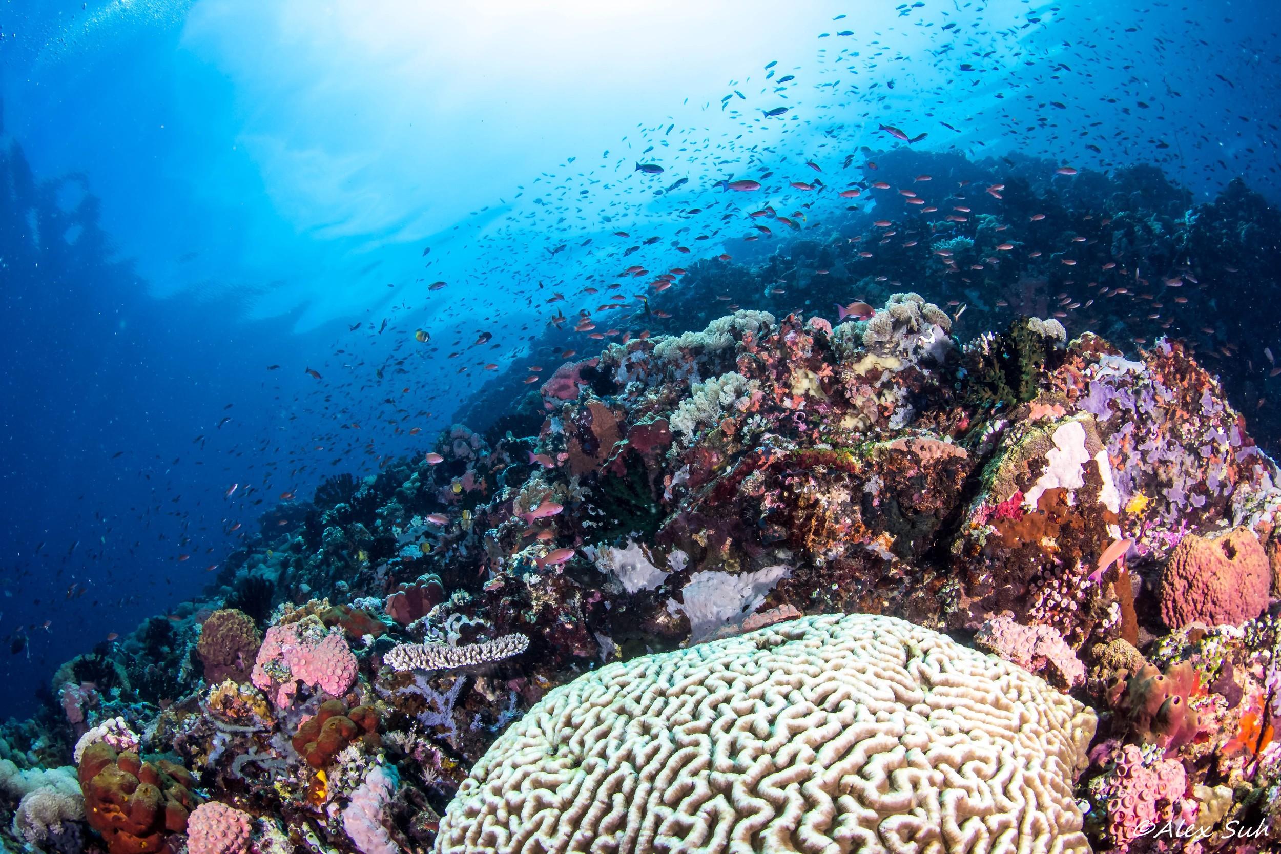 Coral Reef & Brain Coral