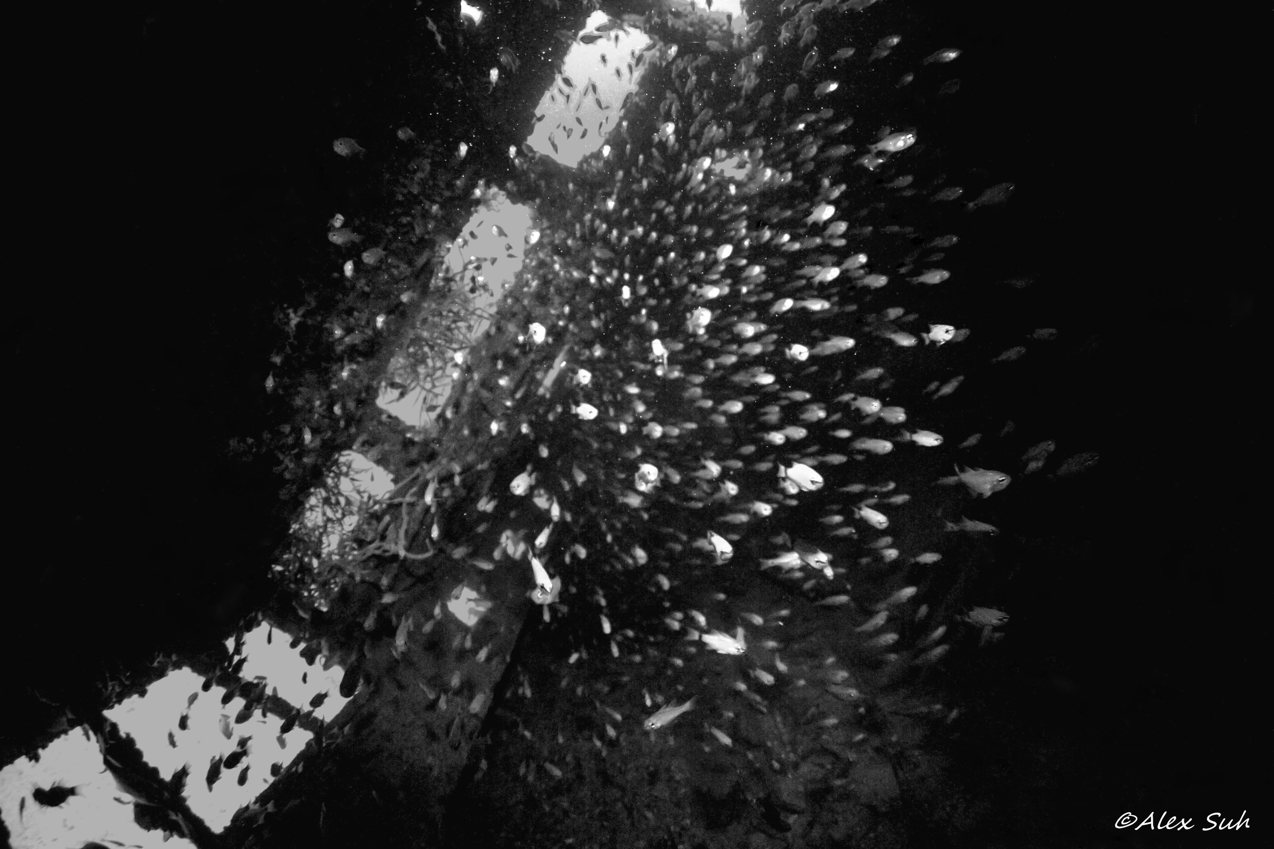 BW Photo Inside A Cabin of A Wreck