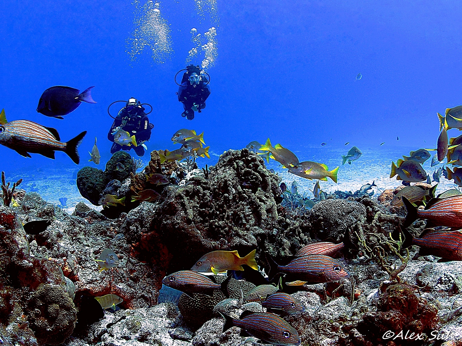 Divers in Cozumel