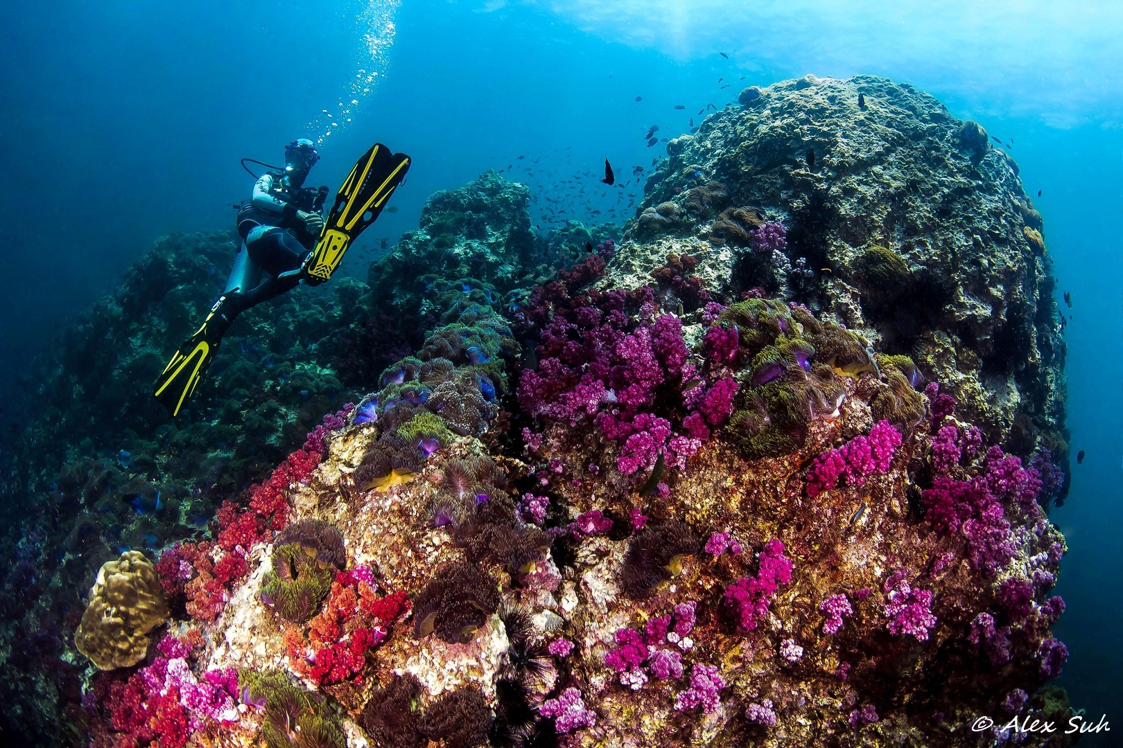 Relaxing in Thailand Near Soft Coral