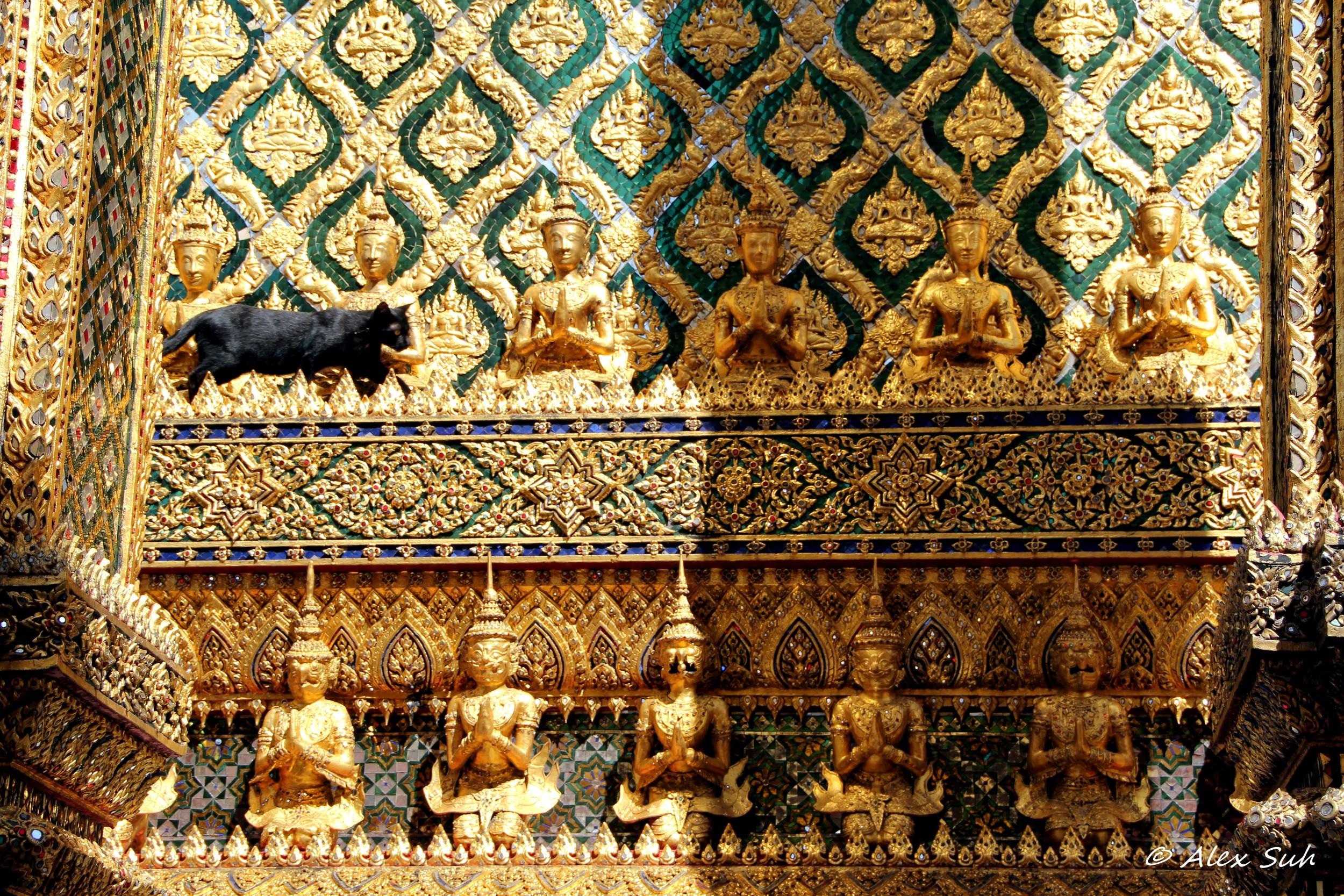 Blk Cat Golden Temple Thai.jpg