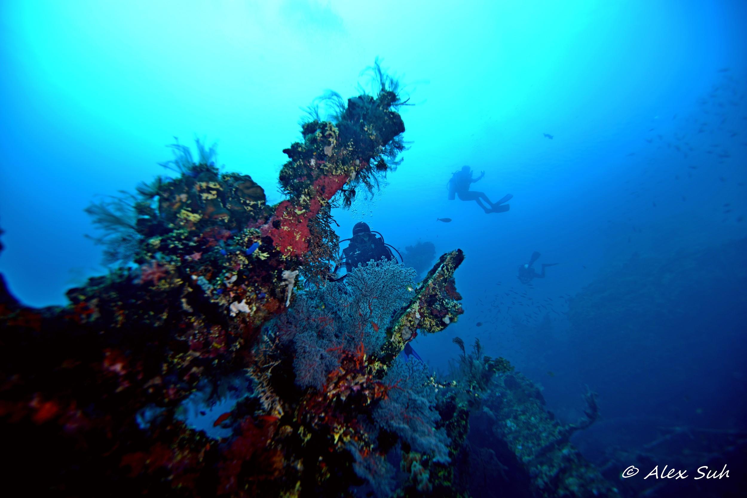 Diver Behind in Coral.jpg