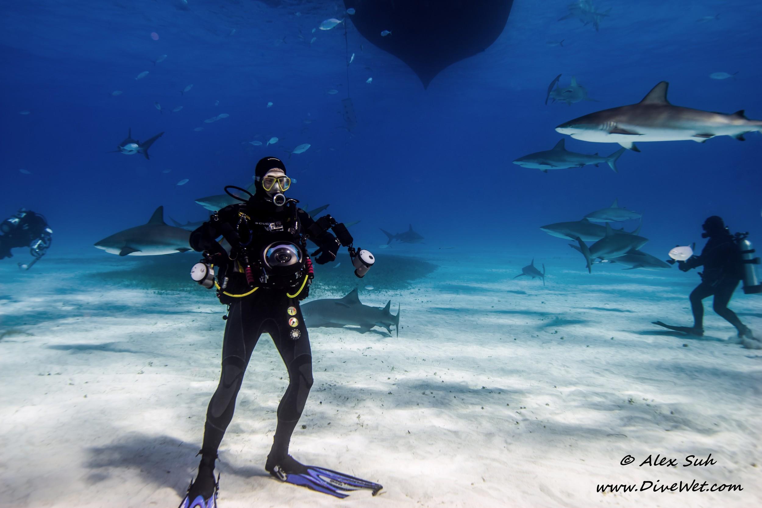 Stefane Surrounded By Sharks.jpg
