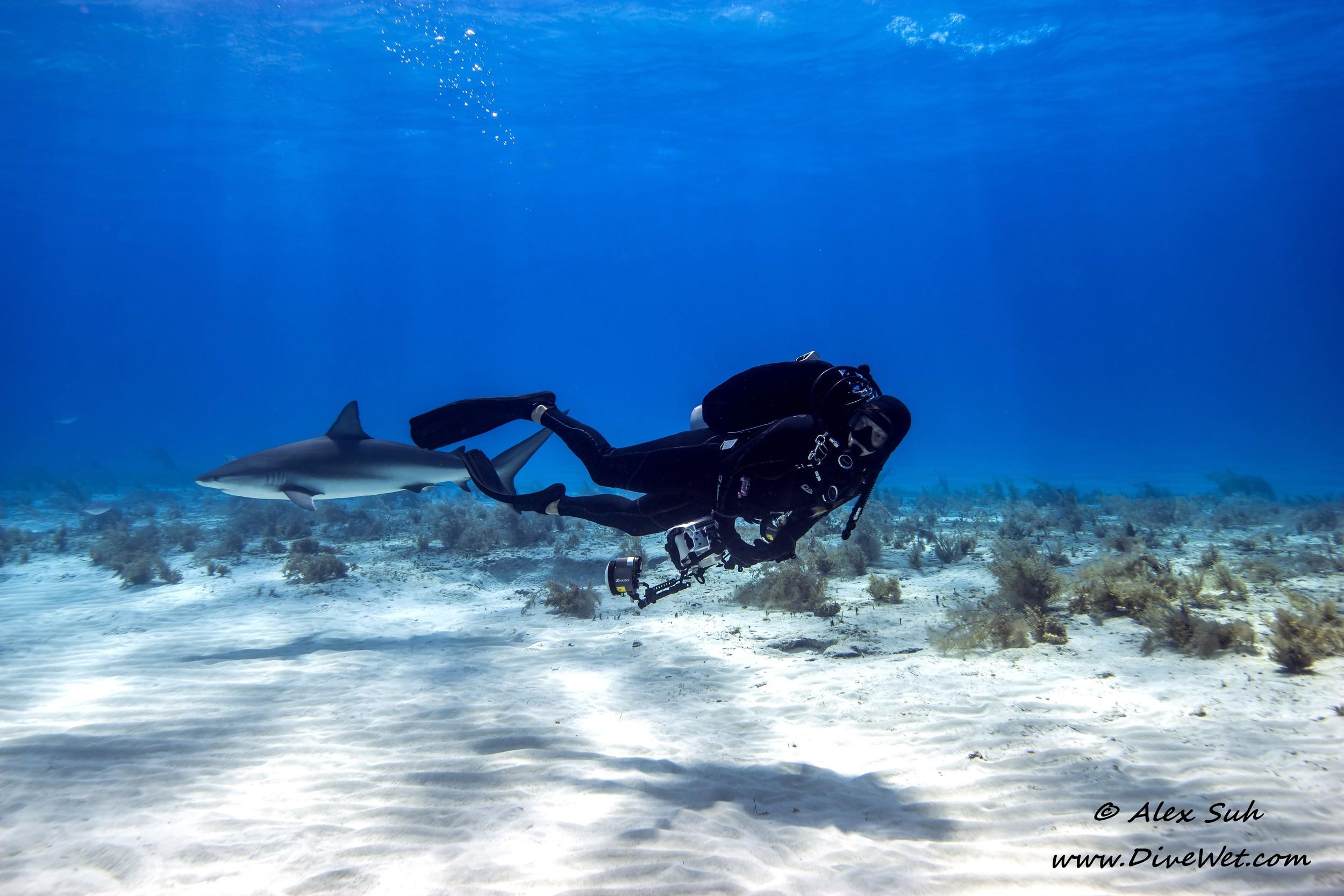 Amanda Cole Swimming With Sharks
