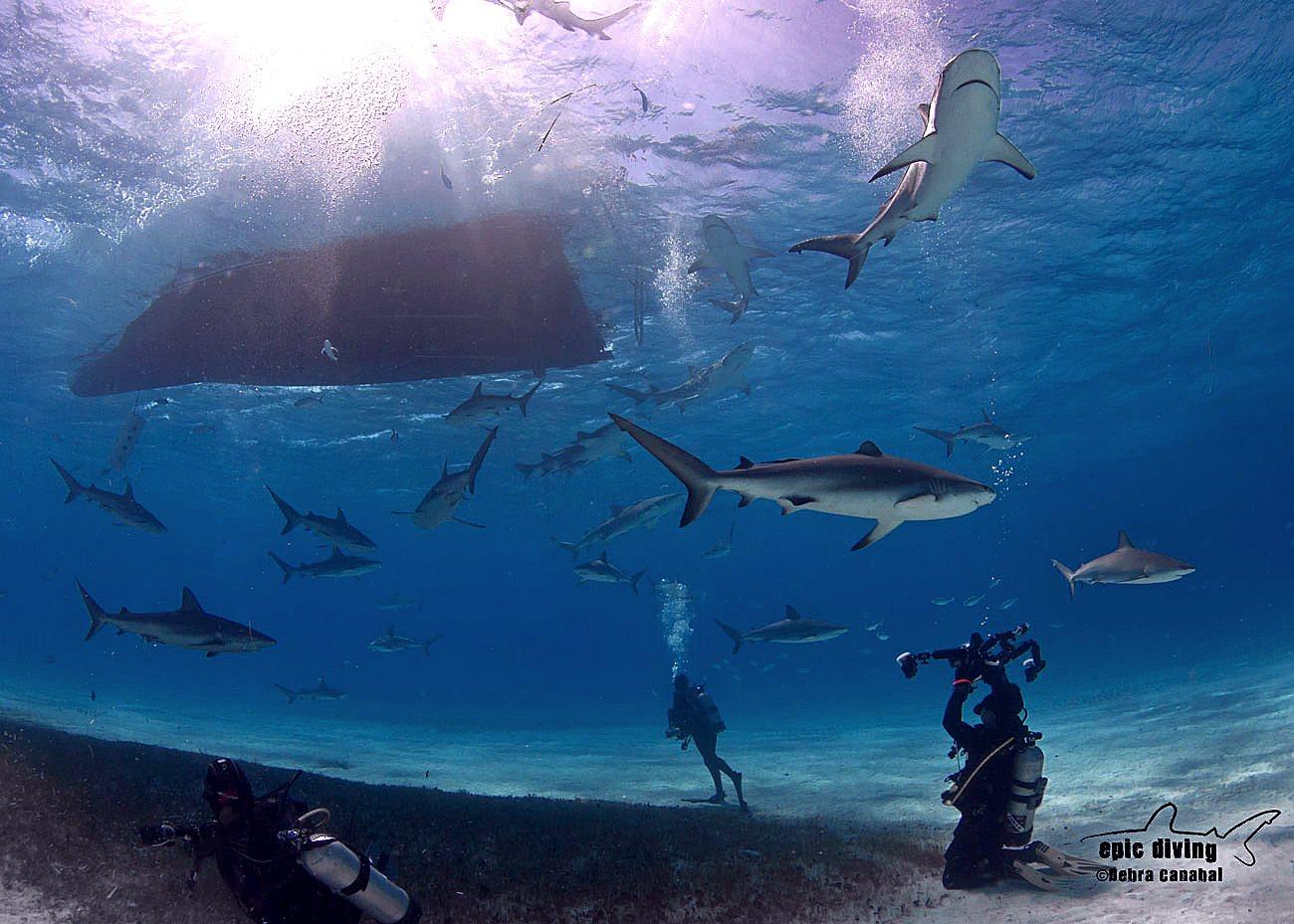 ReefSharkBliss 1.jpg