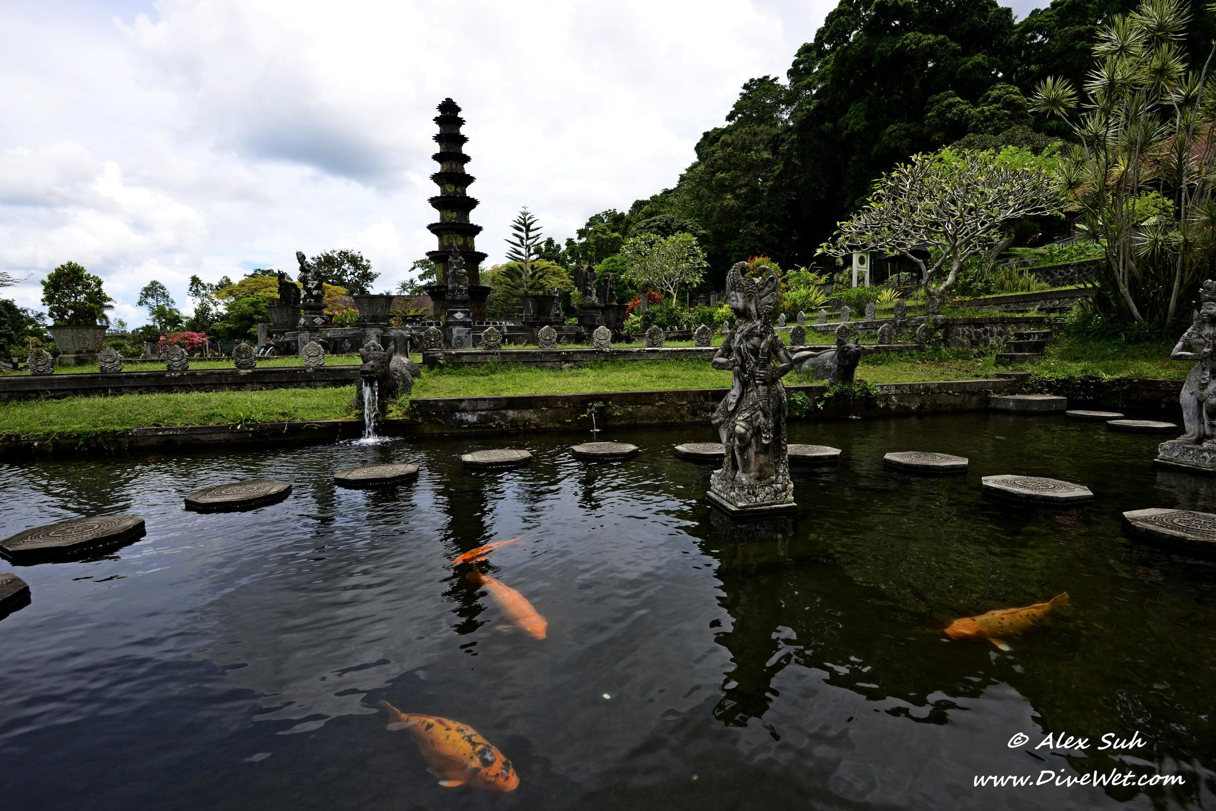 Bali Reflection 4 Koi.jpg