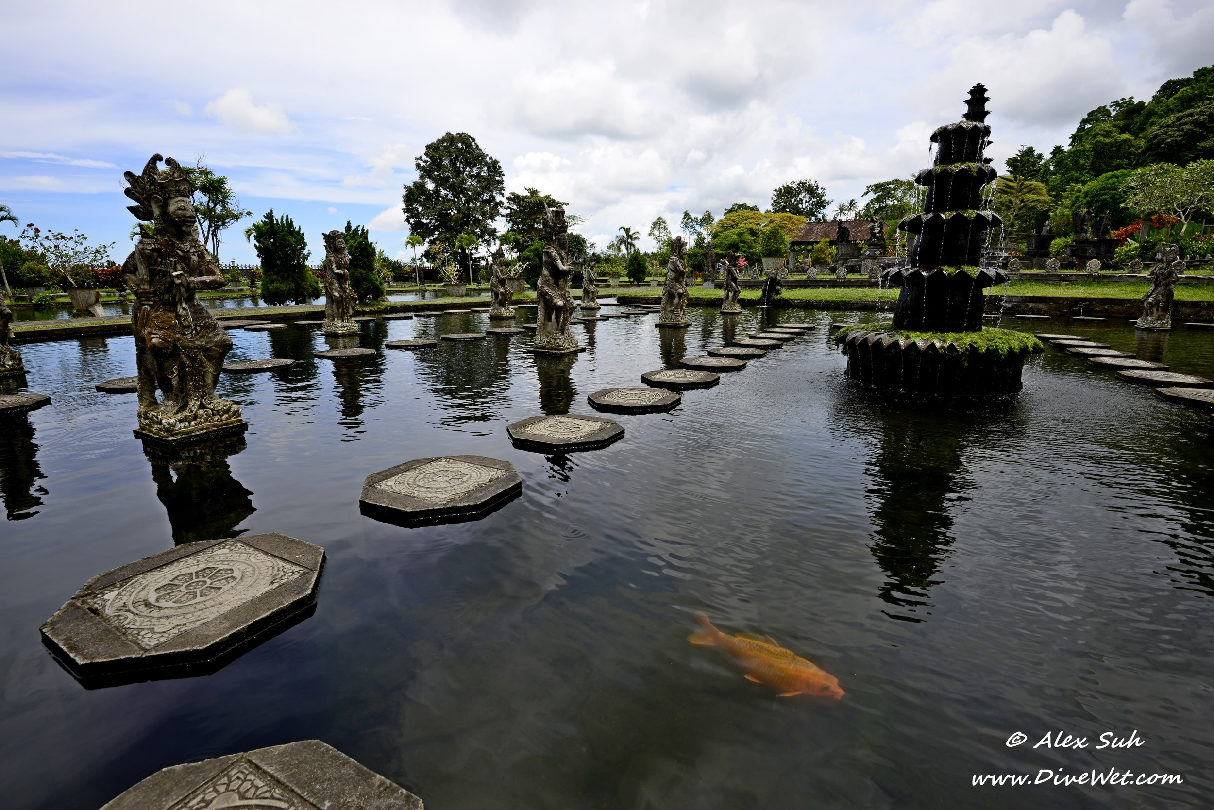 Bali Water Park Reflections Koi.jpg