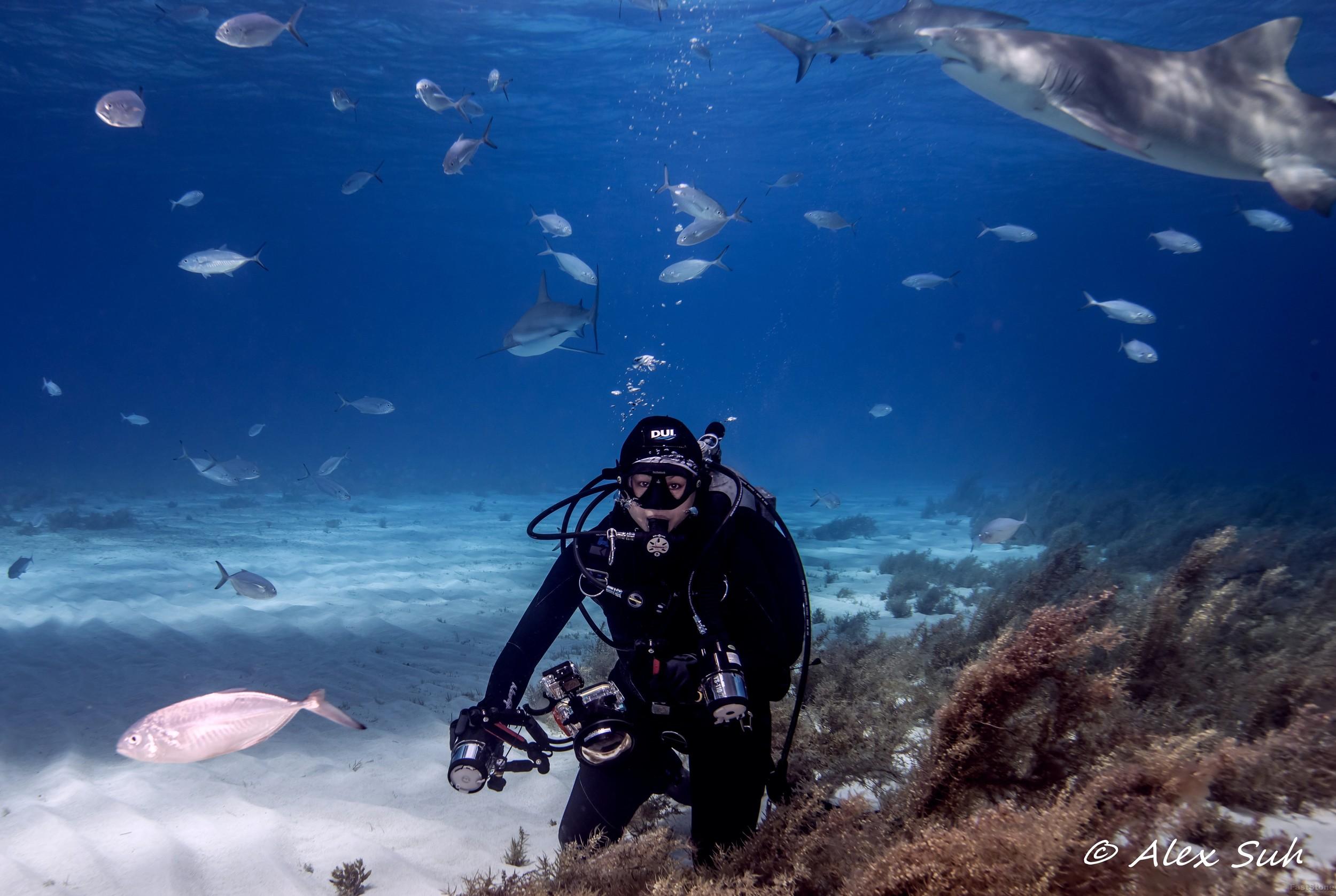 Alice Diving @ Tiger Beach