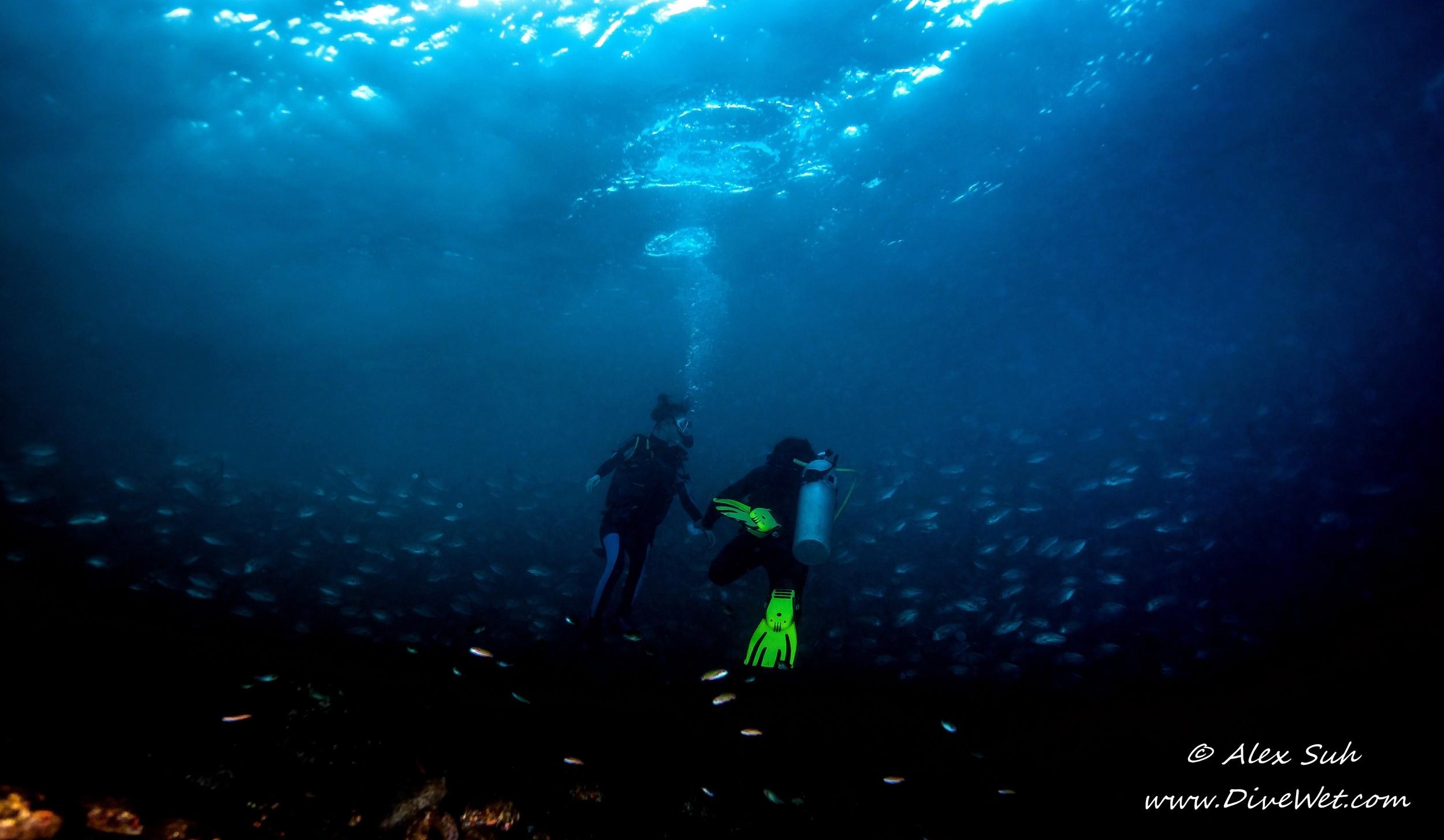 Divers in School of Jacks in Bali