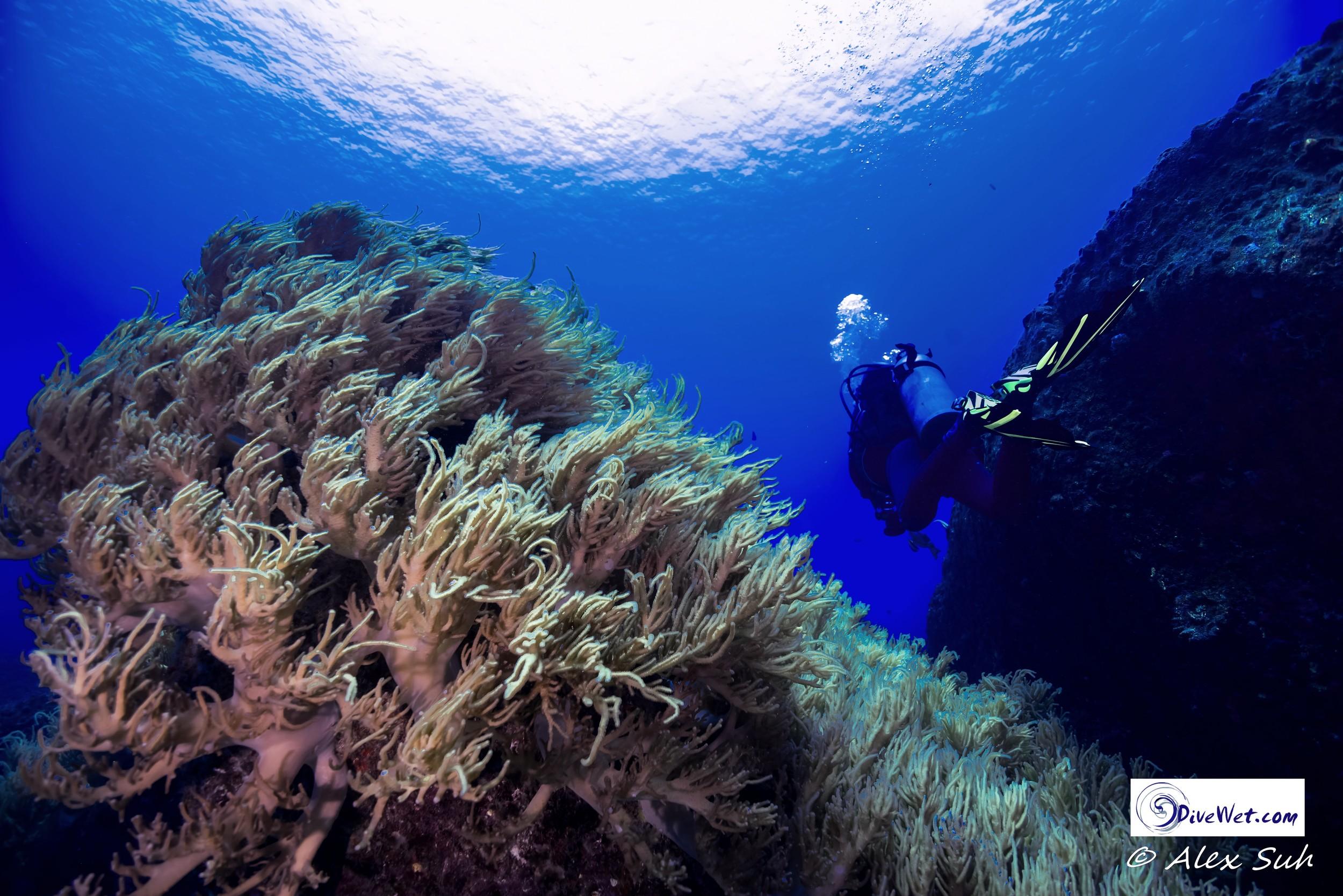 Soft Coral on Boulder in Phuket, Thailand