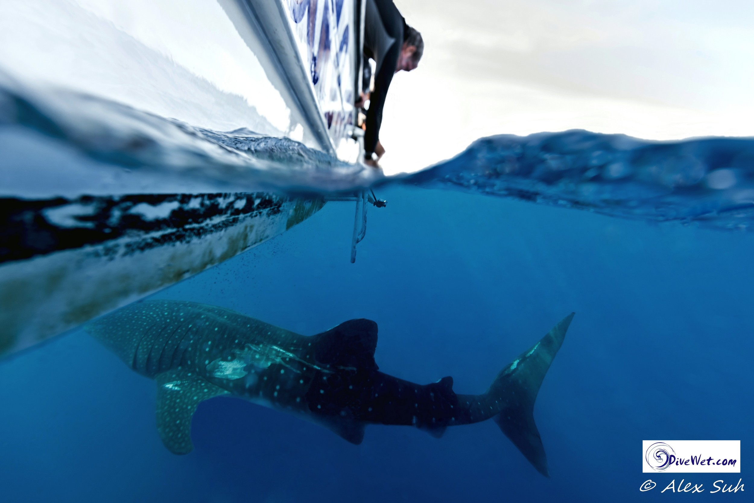 Over Under of Carlo Taking Video of the Whale Shark