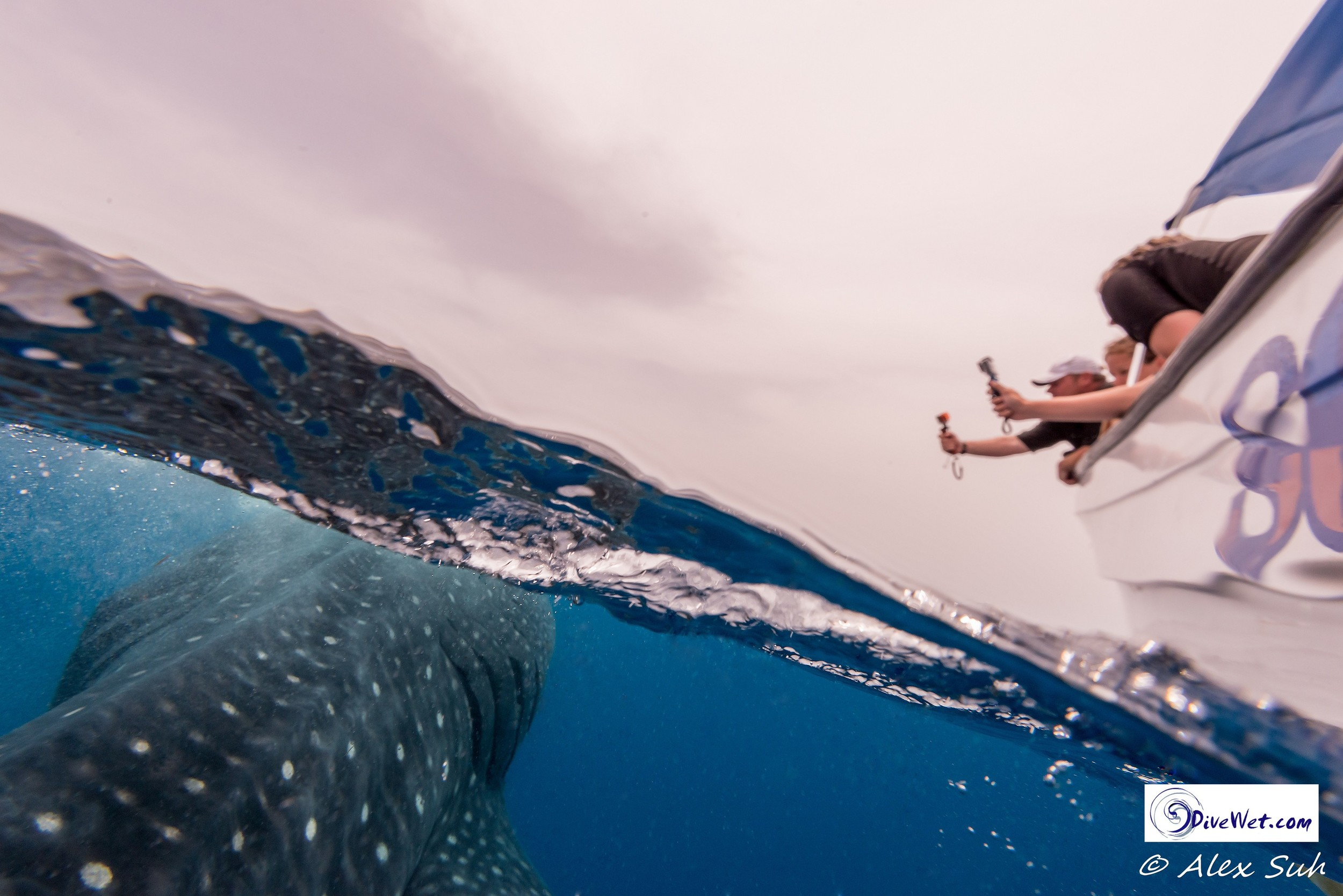Over Under of Richard, Erin and Zach Taking Photos of Whale Shark