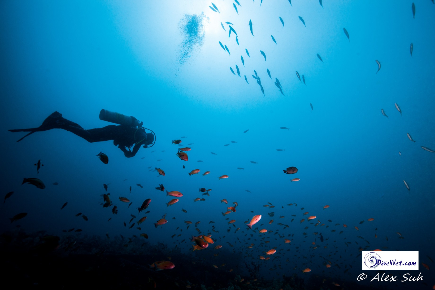 Diver Under Sun with School of Fish