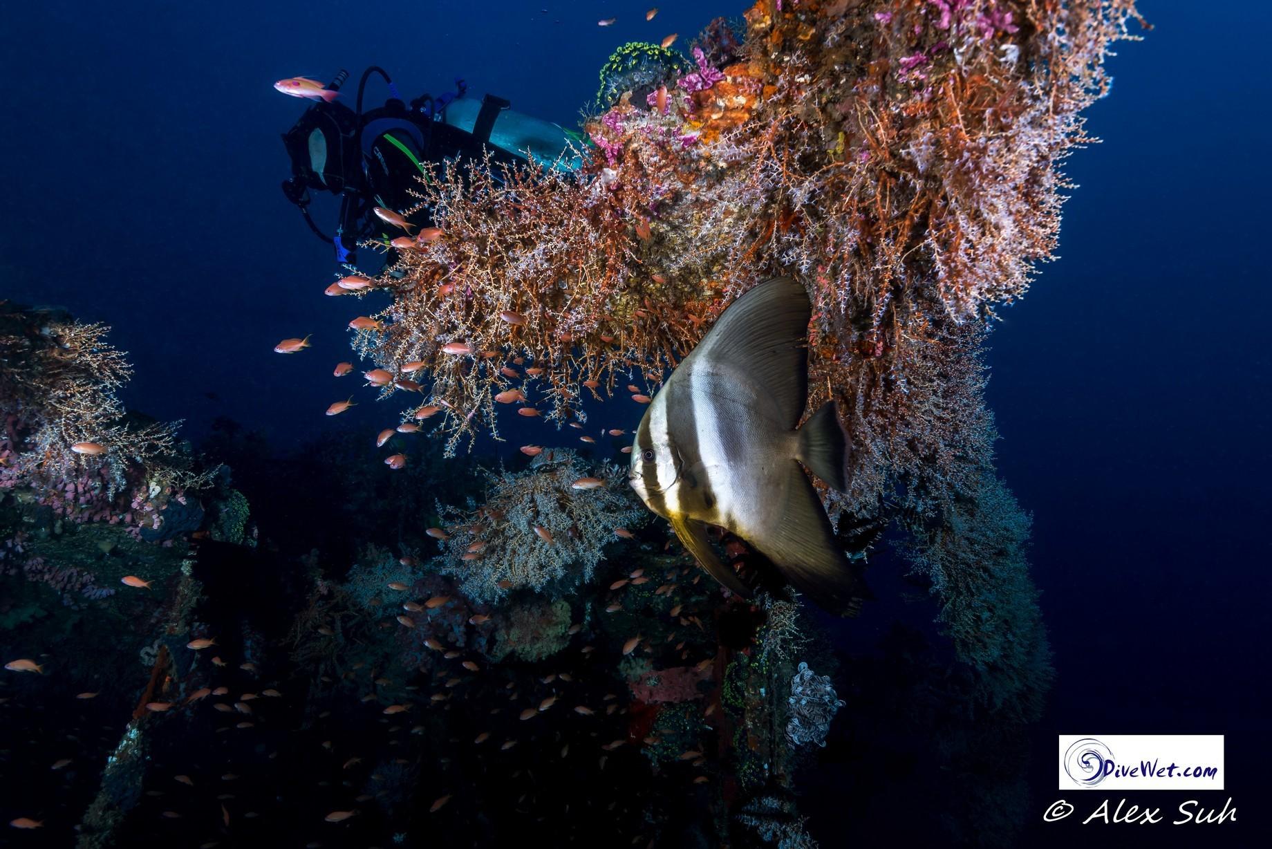 Diver and Bat Fish Dry Dock.jpg